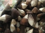 Cung cấp buôn bán nấm mối đen, loại nấm được nhiều người săn đón