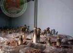 Quy trình trồng nấm mối đen tiêu chuẩn FDA